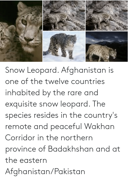 Afghanistan: Snow Leopard. Afghanistan is one of the twelve countries inhabited by the rare and exquisite snow leopard. The species resides in the country's remote and peaceful Wakhan Corridor in the northern province of Badakhshan and at the eastern Afghanistan/Pakistan