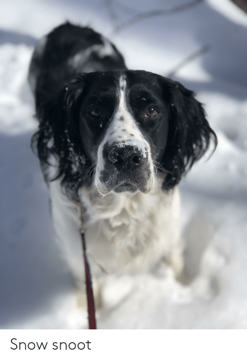 Snow, Snoot, and Snootful: Snow snoot