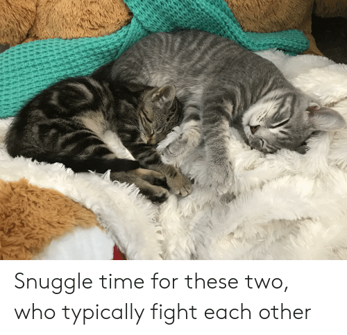 Time, Fight, and Who: Snuggle time for these two, who typically fight each other