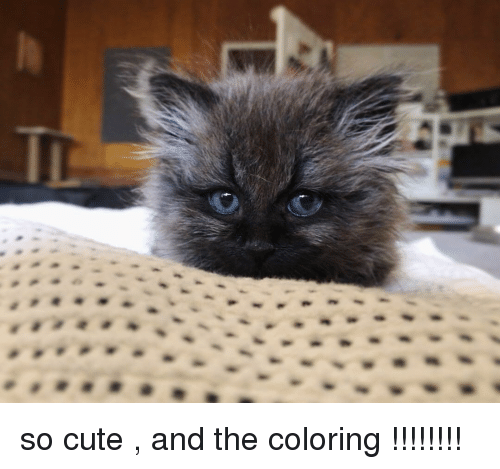 Cute, Home, and Him: so cute , and the coloring !!!!!!!!