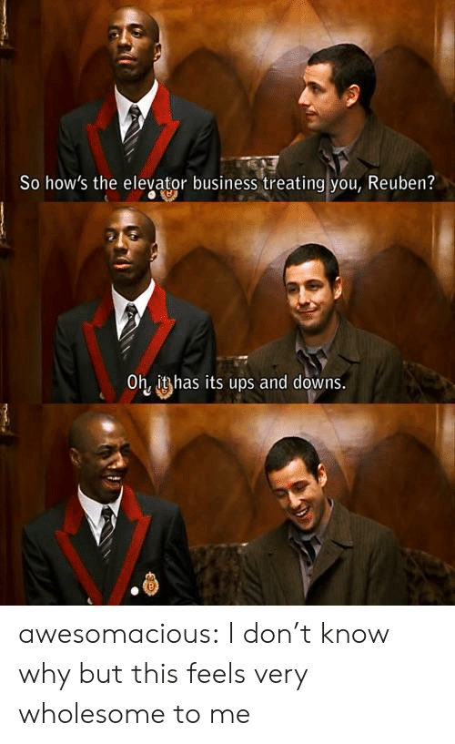 Tumblr, Ups, and Blog: So how's the elevator business treating you, Reuben?  Oh, it has its ups and downs awesomacious:  I don't know why but this feels very wholesome to me
