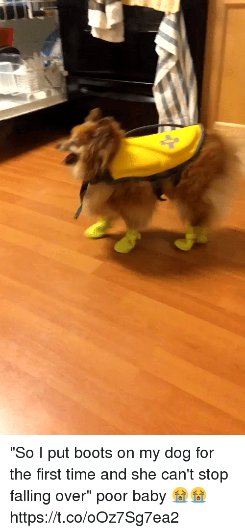 "Falling Over: ""So I put boots on my dog for the first time and she can't stop falling over"" poor baby 😭😭 https://t.co/oOz7Sg7ea2"