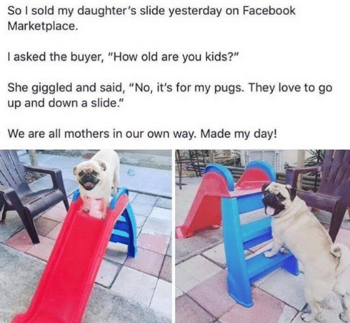 """up and down: So I sold my daughter's slide yesterday on Facebook  Marketplace.  I asked the buyer, """"How old are you kids?""""  She giggled and said, """"No, it's for my pugs. They love to go  up and down a slide.""""  We are all mothers in our own way. Made my day!"""