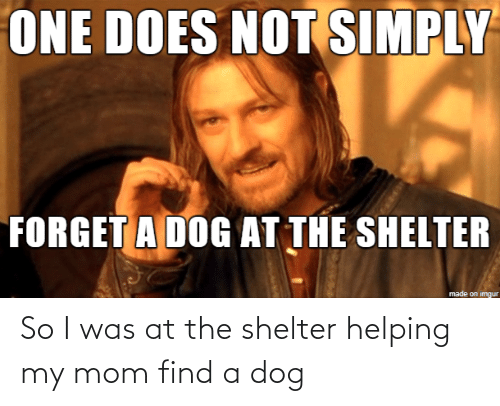 A Dog: So I was at the shelter helping my mom find a dog