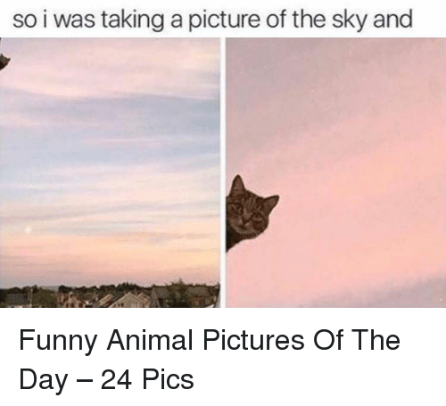 Funny, Animal, and Pictures: so i was taking a picture of the sky and Funny Animal Pictures Of The Day – 24 Pics