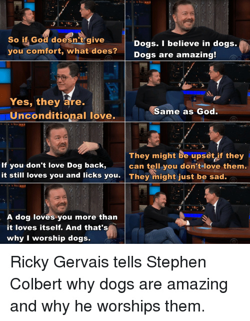 Dogs, God, and Love: So if God doesn't give  you comfort, what does?  Dogs. I believe in dogs.  Dogs are amazing  Yes, they are.  Uinconditional love.  Same as God  They might be upset if they  can tell you don tlove them.  If you don't love Dog back,  it still loves you and licks you They might just be sad.  A dog loves you more than  it loves itself. And that's  why I worship dogs. Ricky Gervais tells Stephen Colbert why dogs are amazing and why he worships them.