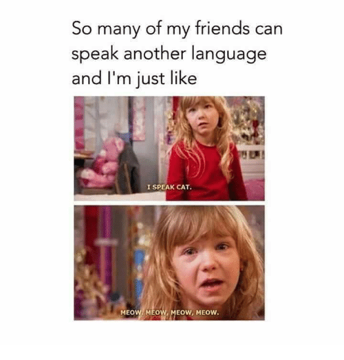 Friends, Funny, and Another: So many of my friends can  speak another language  and I'm just like  I SPEAK CAT.  MEOW MEOW, MEOW, MEOW.
