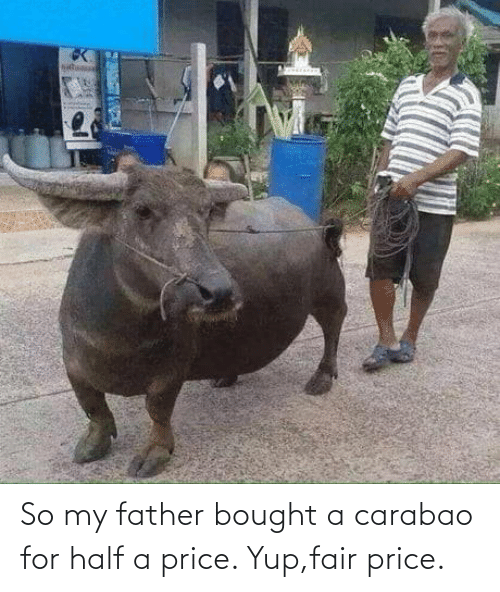 bought: So my father bought a carabao for half a price. Yup,fair price.