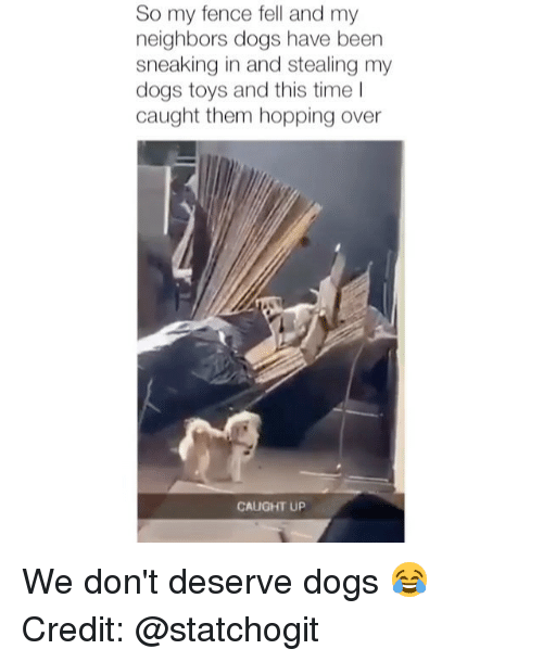 Dogs, Memes, and Neighbors: So my fence fell and my  neighbors dogs have been  sneaking in and stealing my  dogs toys and this time I  caught them hopping over  CAUGHT UP We don't deserve dogs 😂 Credit: @statchogit