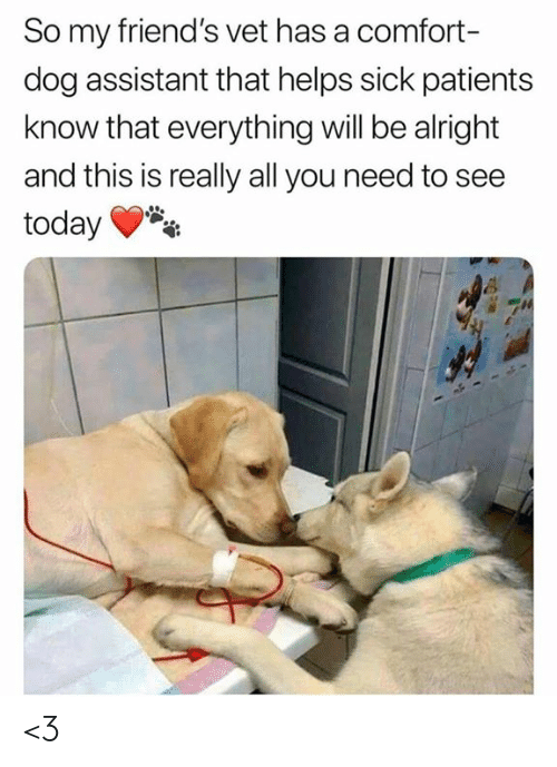 Everything Will: So my friend's vet has a comfort-  dog assistant that helps sick patients  know that everything will be alright  and this is really all you need to see  today <3