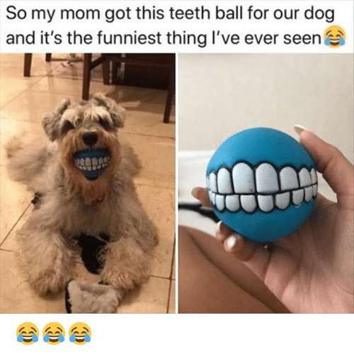 Memes, Mom, and 🤖: So my mom got this teeth ball for our dog  and it's the funniest thing I've ever seen 😂😂😂