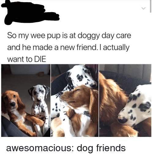 new friend: So my wee pup is at doggy day care  and he made a new friend.I actually  want to DIE awesomacious:  dog friends