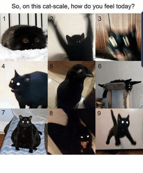 How Do You Feel: So, on this cat-scale, how do you feel today?  4  6.  8. ⠀ ⠀ ⠀ ⠀ ⠀ ⠀ ⠀ ⠀ ⠀