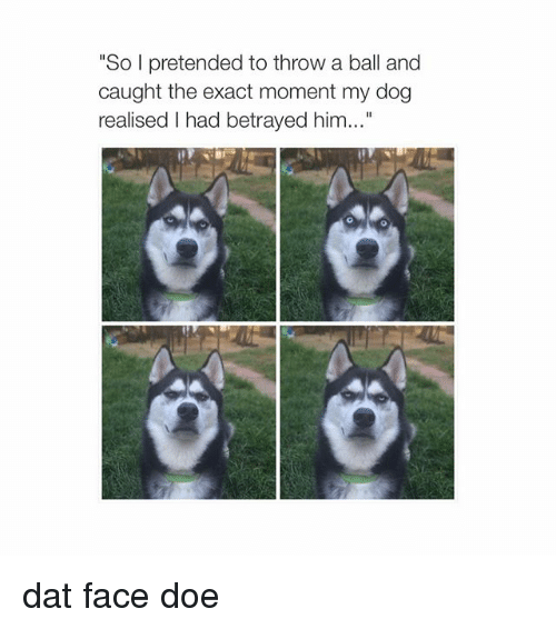 """dat face: """"So pretended to throw a ball and  caught the exact moment my dog  realised I had betrayed him..."""" dat face doe"""