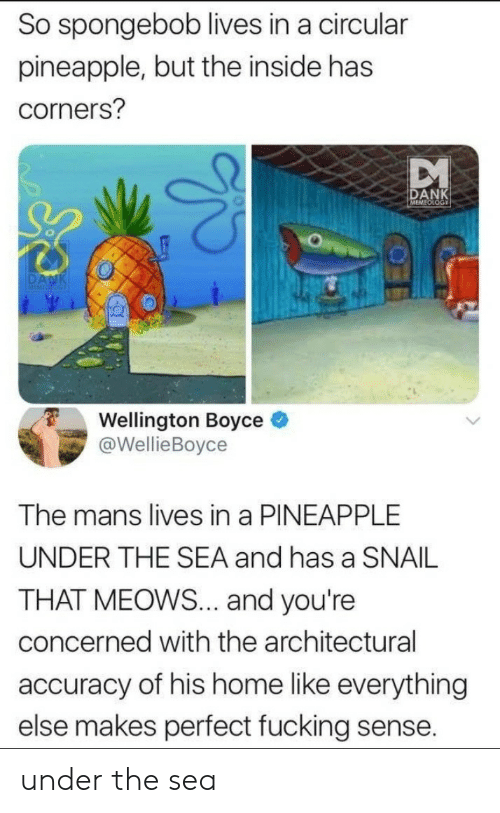 Meows: So spongebob lives in a circular  pineapple, but the inside has  corners?  DANK  Wellington Boyce e  @WellieBoyce  The mans lives in a PINEAPPLE  UNDER THE SEA and has a SNAIL  THAT MEOWS... and you're  concerned with the architectural  accuracy of his home like everything  else makes perfect fucking sense. under the sea