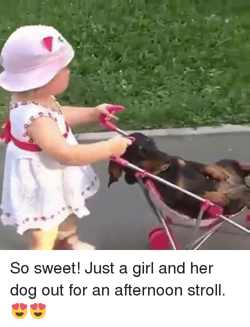 Memes, Girl, and 🤖: So sweet! Just a girl and her dog out for an afternoon stroll. 😍😍