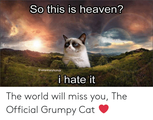 Official Grumpy: So this is heaven?  @veterinaryhumor  i hate it The world will miss you, The Official Grumpy Cat ❤️
