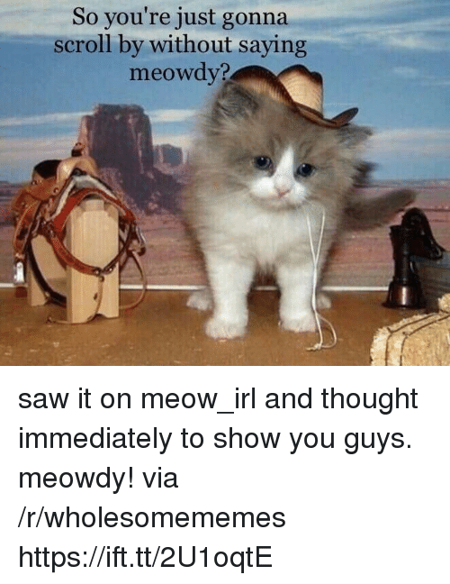 Saw, Thought, and Irl: So you're just gonna  scroll by without saying  meowdy? saw it on meow_irl and thought immediately to show you guys. meowdy! via /r/wholesomememes https://ift.tt/2U1oqtE