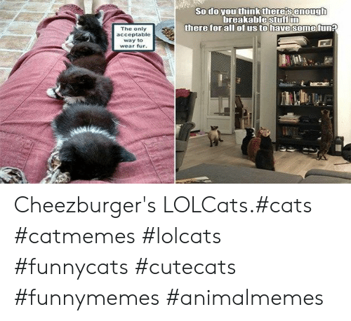 fur: Sodo you think there's enough  breakablestuff in  there for all ofus to have some fun?  The only  acceptable  way to  wear fur. Cheezburger's LOLCats.#cats #catmemes #lolcats #funnycats #cutecats #funnymemes #animalmemes