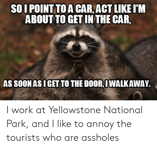 Soon..., Work, and Advice Animals: SOI POINT TO A CAR,ACT LIKE IM  ABOUTTO GET INTHE CAR,  AS SOON AS IGET TO THE DOOR IWALKAWAY I work at Yellowstone National Park, and I like to annoy the tourists who are assholes