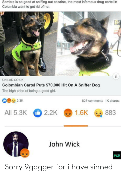 John Wick, Sorry, and Cocaine: Sombra is so good at sniffing out cocaine, the most infamous drug cartel i  Colombia want to get rid of her.  UNILAD.CO.UK  Colombian Cartel Puts $70,000 Hit On A Sniffer Dog  The high price of being a good girl.  5.3K  827 comments 1K share  2.2K  1.6K  All 5.3K  883  John Wick Sorry 9gagger for i have sinned