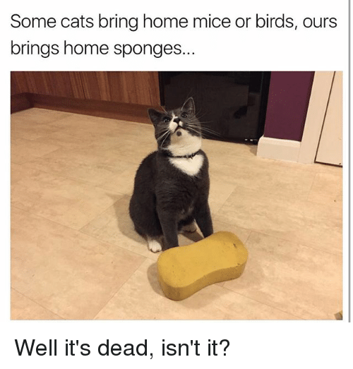 sponges: Some cats bring home mice or birds, ours  brings home sponges. Well it's dead, isn't it?
