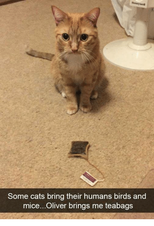 Cats, Memes, and Birds: Some cats bring their humans birds and  mice...Oliver brings me teabags