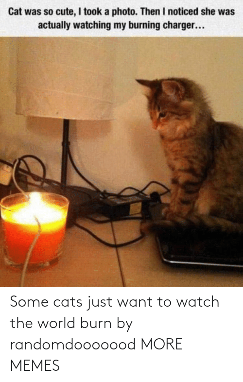 Just Want: Some cats just want to watch the world burn by randomdooooood MORE MEMES