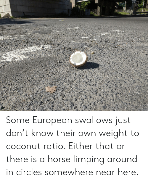 somewhere: Some European swallows just don't know their own weight to coconut ratio. Either that or there is a horse limping around in circles somewhere near here.