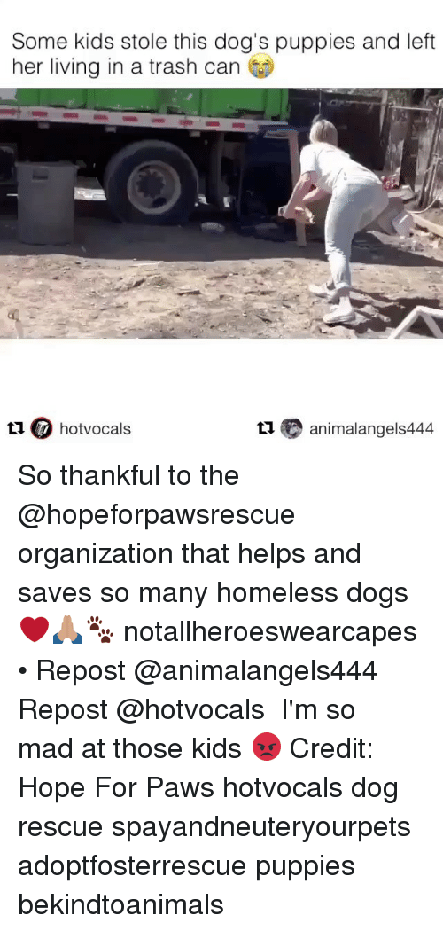 hopeing: Some kids stole this dog's puppies and left  her living in a trash can  t1 hotvocals  t animalangels444 So thankful to the @hopeforpawsrescue organization that helps and saves so many homeless dogs ❤️🙏🏽🐾 notallheroeswearcapes • Repost @animalangels444 ・・・ Repost @hotvocals ・・・ I'm so mad at those kids 😡 Credit: Hope For Paws hotvocals dog rescue spayandneuteryourpets adoptfosterrescue puppies bekindtoanimals