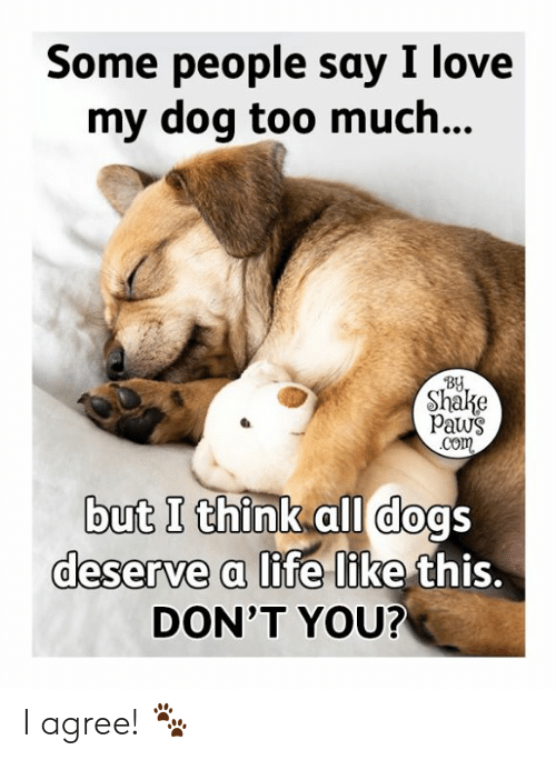 Paws: Some people say I love  my dog too much...  BY  Shake  Paws  .Com  but I think all dogs  deserve a life like this.  DON'T YOU? I agree! 🐾