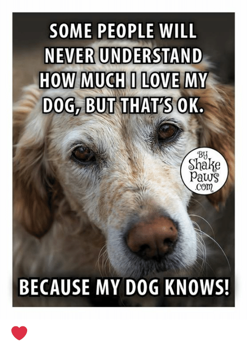 Paws: SOME PEOPLE WILL  NEVER UNDERSTAND  HOW MUCHI LOVE MY  DOG, BUT THATSOK.  By  Shake  Paws  com  BECAUSE MY DOG KNOWS! ❤️