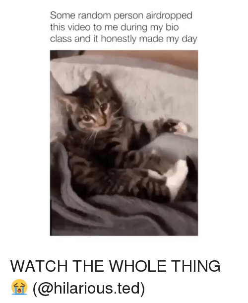 Memes, Ted, and Video: Some random person airdropped  this video to me during my bic  class and it honestly made my day WATCH THE WHOLE THING 😭 (@hilarious.ted)