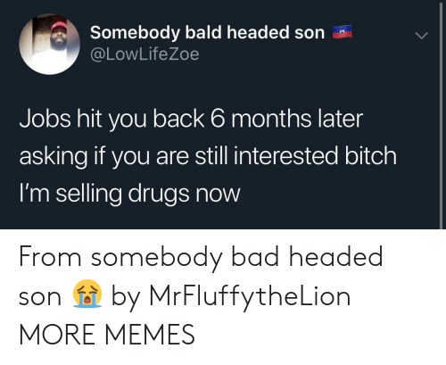 Bad, Bitch, and Dank: Somebody bald headed son  @LowLifeZoe  Jobs hit you back 6 months later  asking if you are still interested bitch  I'm selling drugs now From somebody bad headed son 😭 by MrFluffytheLion MORE MEMES