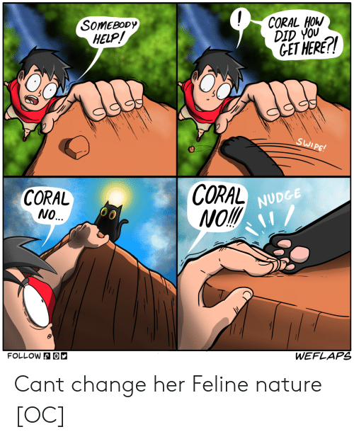 coral: SOMEBODy  HELP  CORAL HOW  DID YOU  GET HERE!  CORAL  NO.  CORAL  Mol  NUDGE  FOLLOWA  WEFLAPS Cant change her Feline nature [OC]