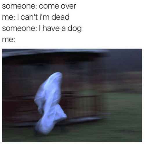 Come Over, Dog, and Dead: someone: COme over  me: I can't i'm dead  someone: I have a dog  me:
