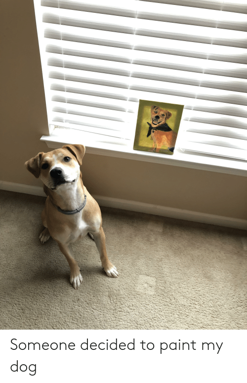 Paint, Dog, and Someone: Someone decided to paint my dog