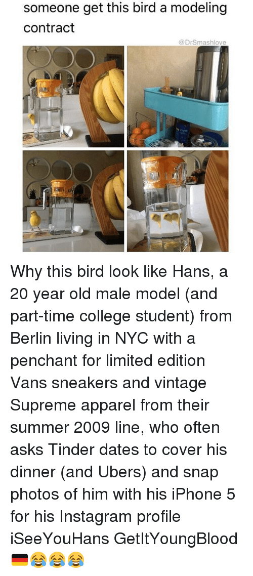 Memes, Tinder, and Birds: someone get this bird a modeling  Contract  DrSmashlove Why this bird look like Hans, a 20 year old male model (and part-time college student) from Berlin living in NYC with a penchant for limited edition Vans sneakers and vintage Supreme apparel from their summer 2009 line, who often asks Tinder dates to cover his dinner (and Ubers) and snap photos of him with his iPhone 5 for his Instagram profile iSeeYouHans GetItYoungBlood 🇩🇪😂😂😂