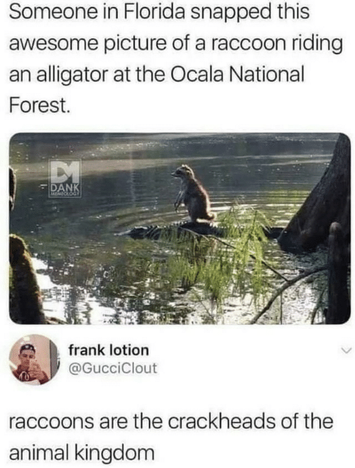 Dank, Alligator, and Animal: Someone in Florida snapped this  awesome picture of a raccoon riding  an alligator at the Ocala National  Forest.  DANK  MOMIOLOG  frank lotion  @GucciClout  raccoons are the crackheads of the  animal kingdom