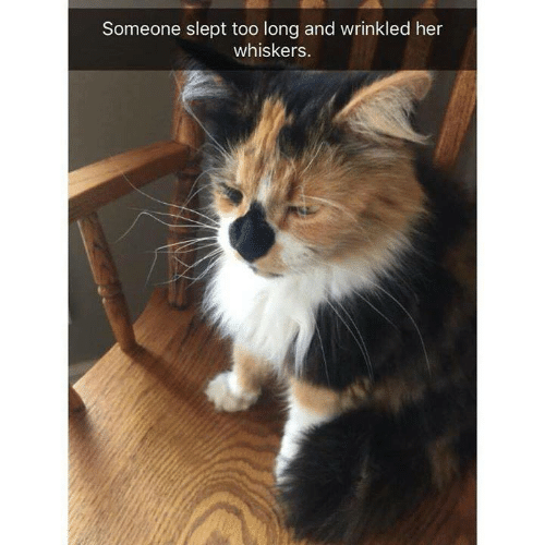 Memes, 🤖, and Her: Someone slept too long and wrinkled her  whiskers.