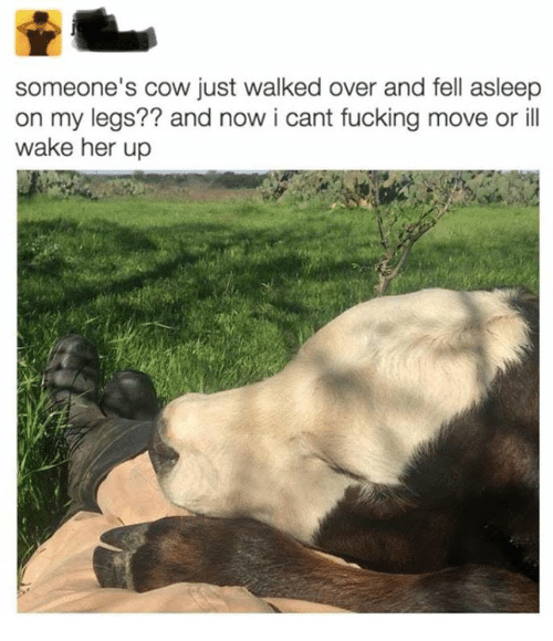 Fucking, Her, and Cow: someone's cow just walked over and fell asleep  on my legs?? and now i cant fucking move or ill  wake her up