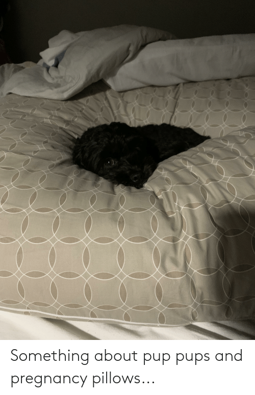 pillows: Something about pup pups and pregnancy pillows...