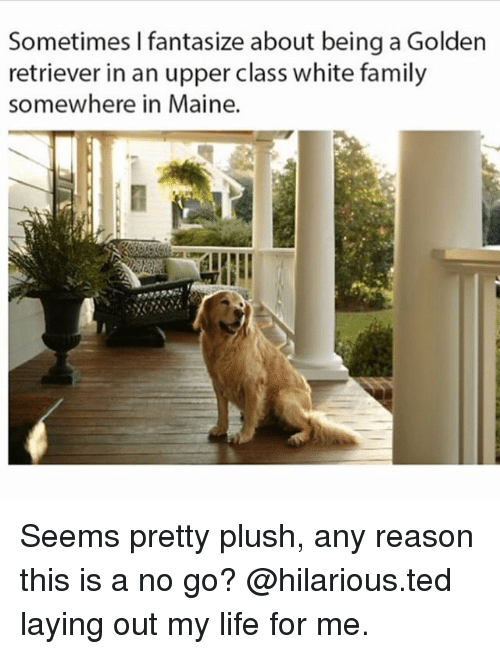 Family, Life, and Memes: Sometimes I fantasize about being a Golden  retriever in an upper class white family  somewhere in Maine. Seems pretty plush, any reason this is a no go? @hilarious.ted laying out my life for me.