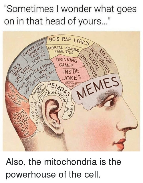 "Drinking, Head, and Memes: ""Sometimes I wonder what goes  on in that head of yours..""  90'S RAP LYRICS  MORTAL KOMBAT o  FATALITIES  ON GAMES  PEMDAS  DRINKING  MY\ INSIDE  RRATIONAL  CASH  HING  MOVIE  NOBODY O  GETS  QUOTES o  //19/11  BUT  ME  @sean Also, the mitochondria is the powerhouse of the cell."