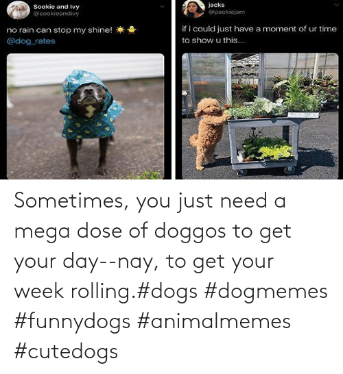 Get Your: Sometimes, you just need a mega dose of doggos to get your day--nay, to get your week rolling.#dogs #dogmemes #funnydogs #animalmemes #cutedogs