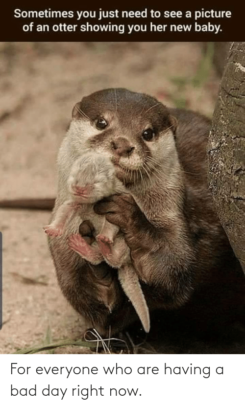 otter: Sometimes you just need to see a picture  of an otter showing you her new baby. For everyone who are having a bad day right now.