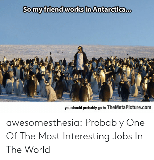 themetapicture: Somyfriend works in Antarctica.  you should probably go to TheMetaPicture.com awesomesthesia:  Probably One Of The Most Interesting Jobs In The World