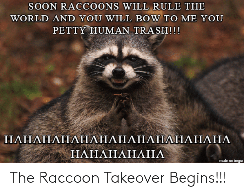 petty: SOON RACCOONS WILL RULE THE  WORLD AND YOU WILL BOW TO ME YOU  PETTY HUMAN TRASH!!!  НАНАНАНАНАНАНАНАНАНАНАНА  НАНАНАНАНА  made on imgur The Raccoon Takeover Begins!!!