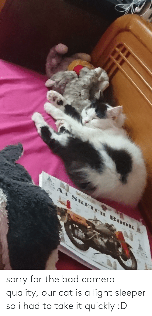 Aww Memes: sorry for the bad camera quality, our cat is a light sleeper so i had to take it quickly :D