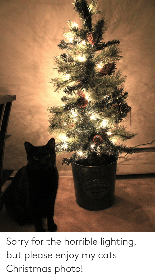 Cats, Christmas, and Sorry: Sorry for the horrible lighting, but please enjoy my cats Christmas photo!
